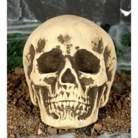 Calavera 22 cm craneo Foam decoracion halloween