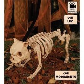 Esqueleto perro con luz y sonido 40 cms bulldog