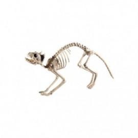 Esqueleto de gato decoracion
